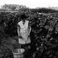 1978 10 Making wine 21.jpg